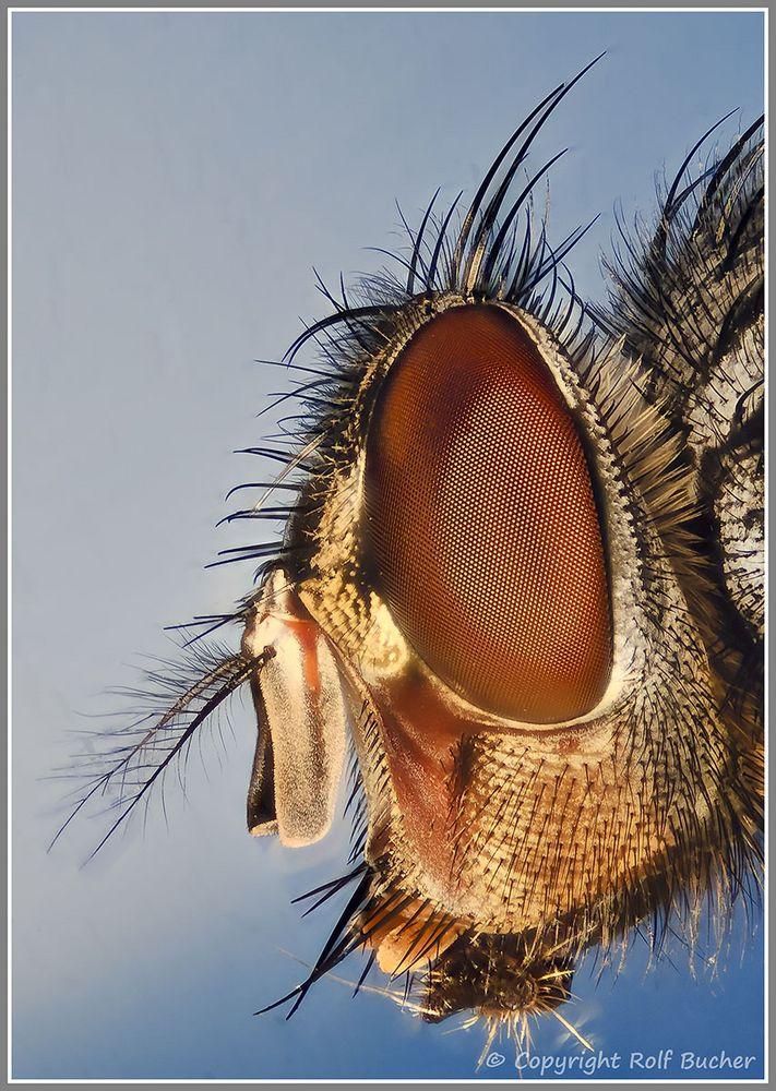 Fliegen Profil (Licht + Schatten)
