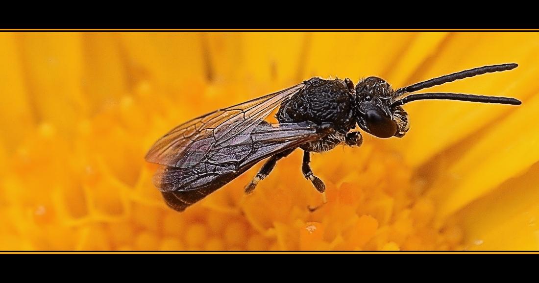 Extrem Fliegende Ameise ?? Foto & Bild | tiere, wildlife, insekten Bilder IE12