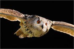 Fliegende Augen