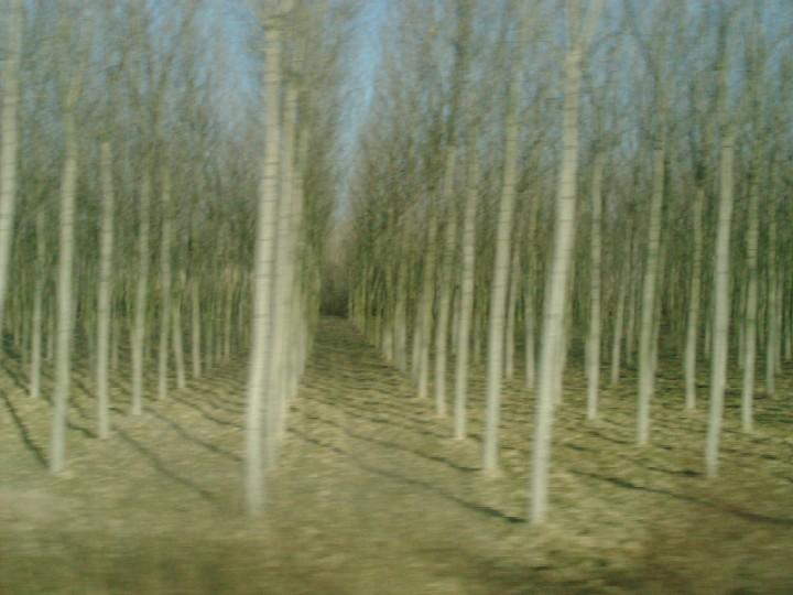 fliegende Baumalleen