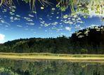 ## fliegende Blätter ##