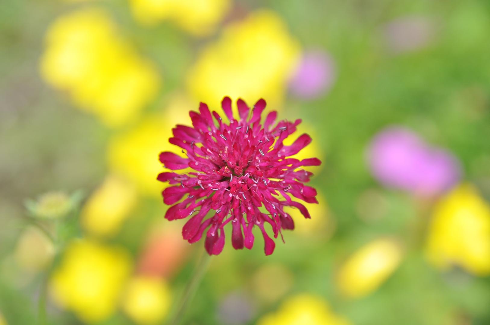 Fliegende Blume