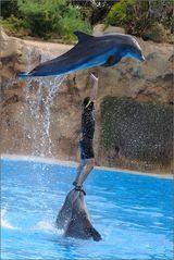 ~ Fliegende Delfine (2) ~