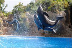 ~ fliegende Delfine ~