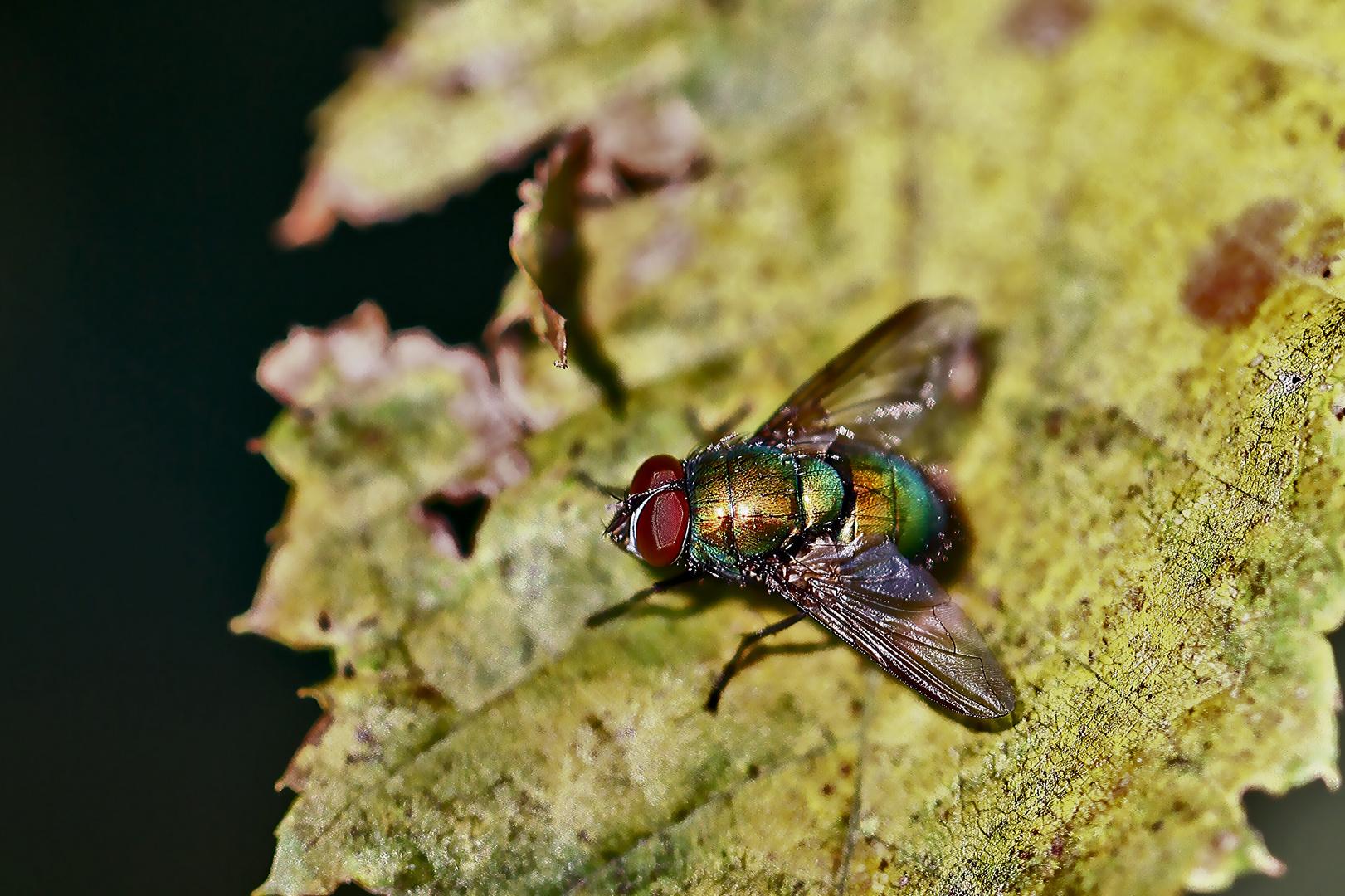 Fliegende Farben
