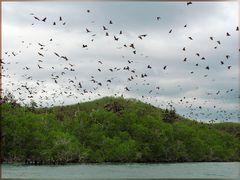 Fliegende Hunde auf den Inseln vor Riung- Flores