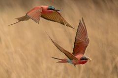 Fliegende Jäger