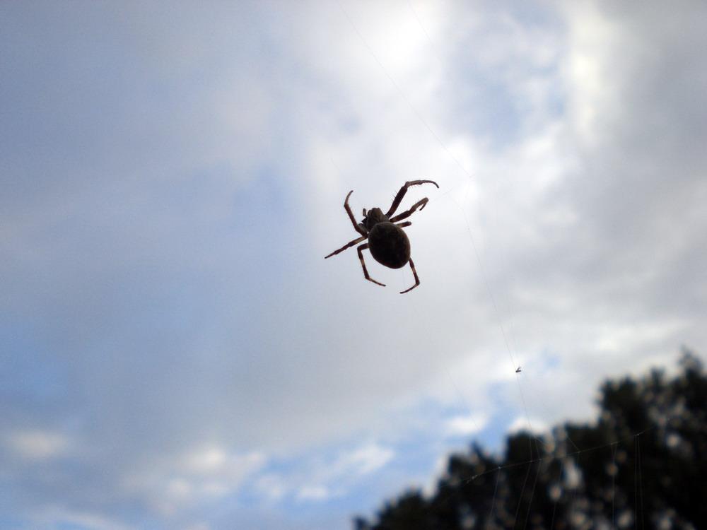 Fliegende Spinnen