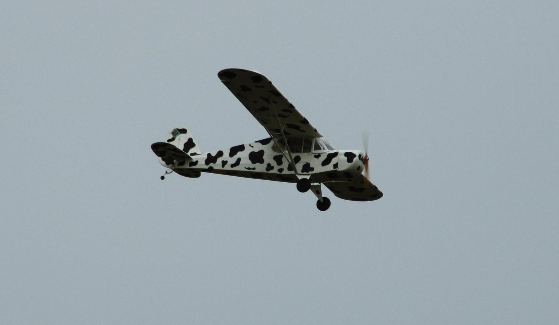 Fliegende Kuh!