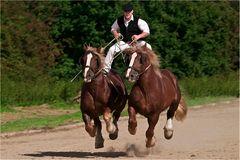 °°° fliegende Pferde °°°