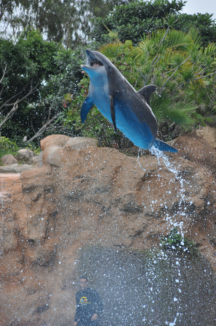 Fliegender Delfin