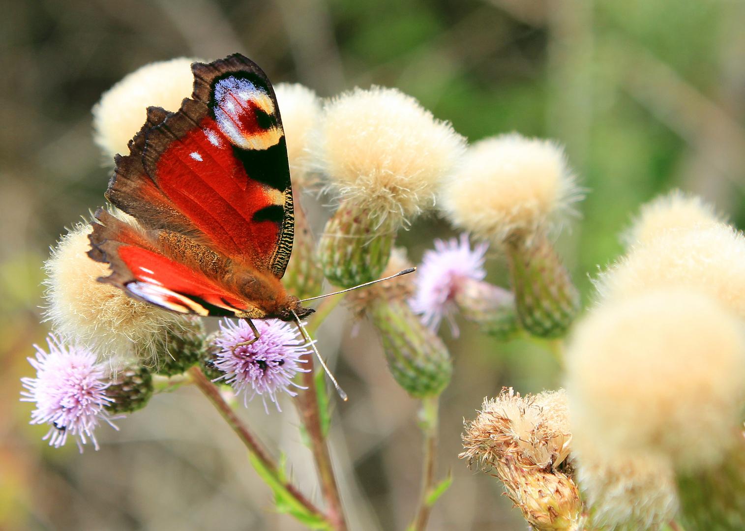 fliegender Farbentupfer 2
