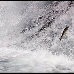 fliegender Fisch ...