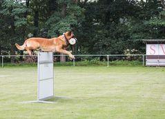 fliegender Hund,
