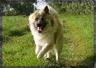fliegender Hund;)