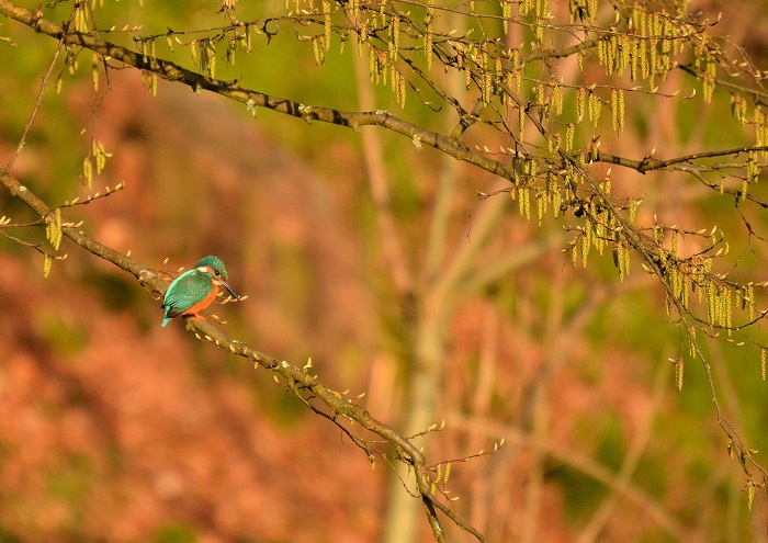 Fliegender Juwel
