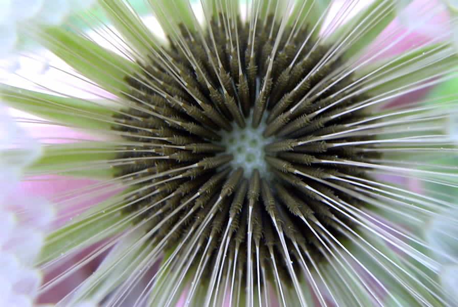 Fliegender Samen
