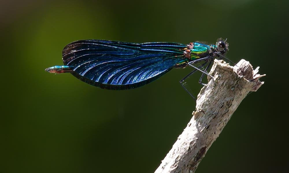 Fliegendes Edelmetall