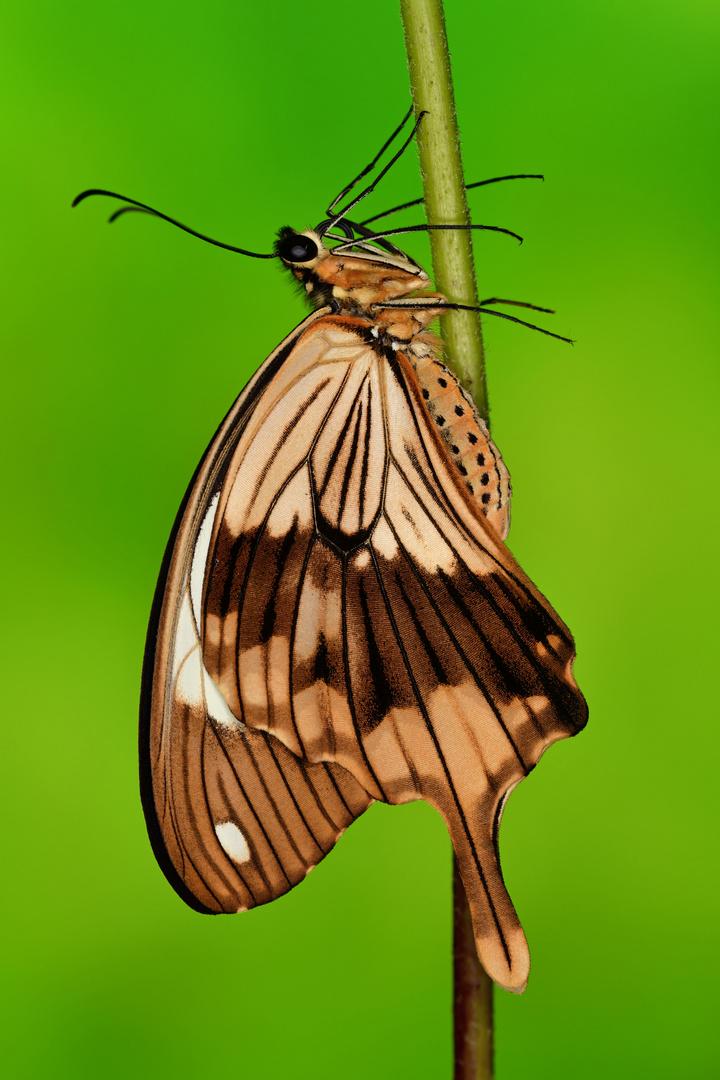 fliegendes Taschentuch
