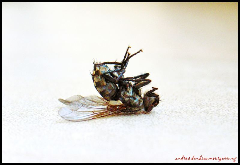 Fliegenkörper