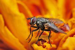 Fliegenmacro
