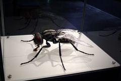Fliegenmodell hinter Glas