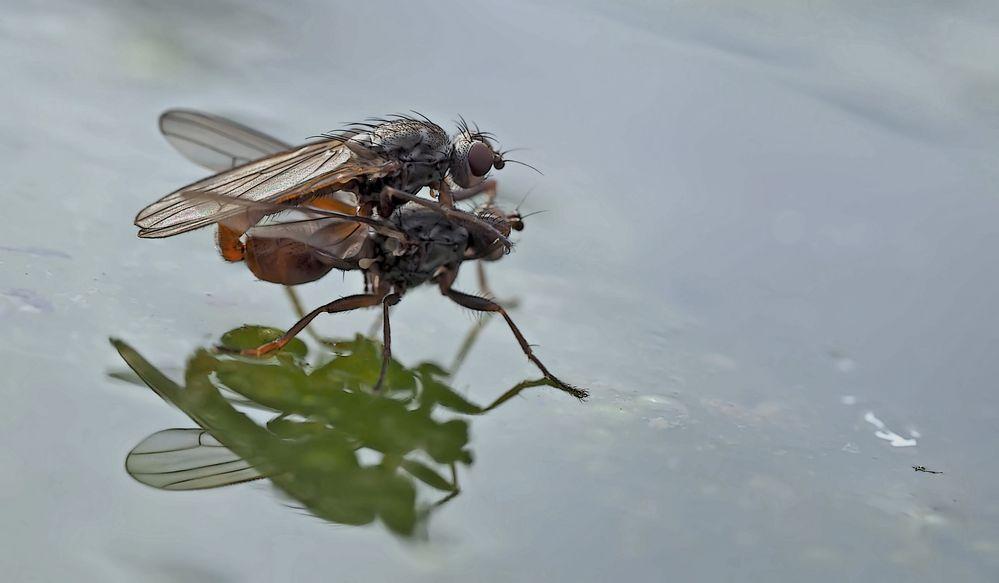 Fliegenpoesie auf dem kalten Wasser... (Foto 1) - Sex à la surface de l'eau au mois de janvier!
