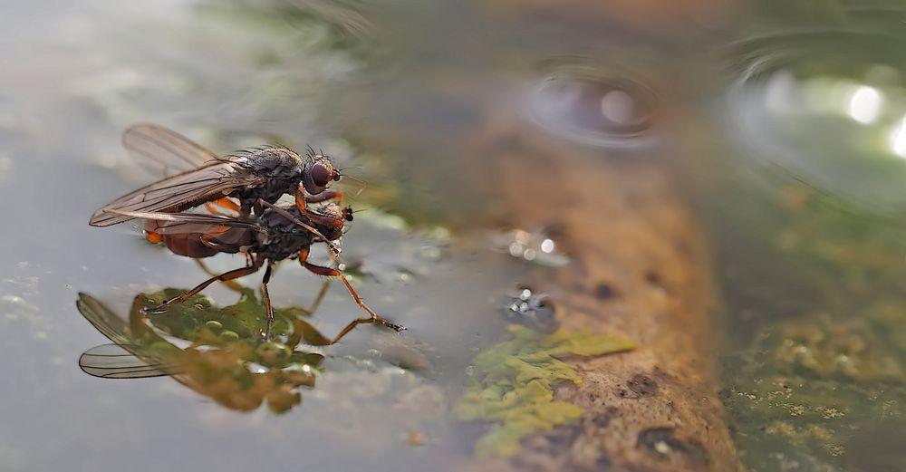 Fliegenpoesie auf dem kalten Wasser... (Foto 2) - Sex à la surface de l'eau au mois de janvier!