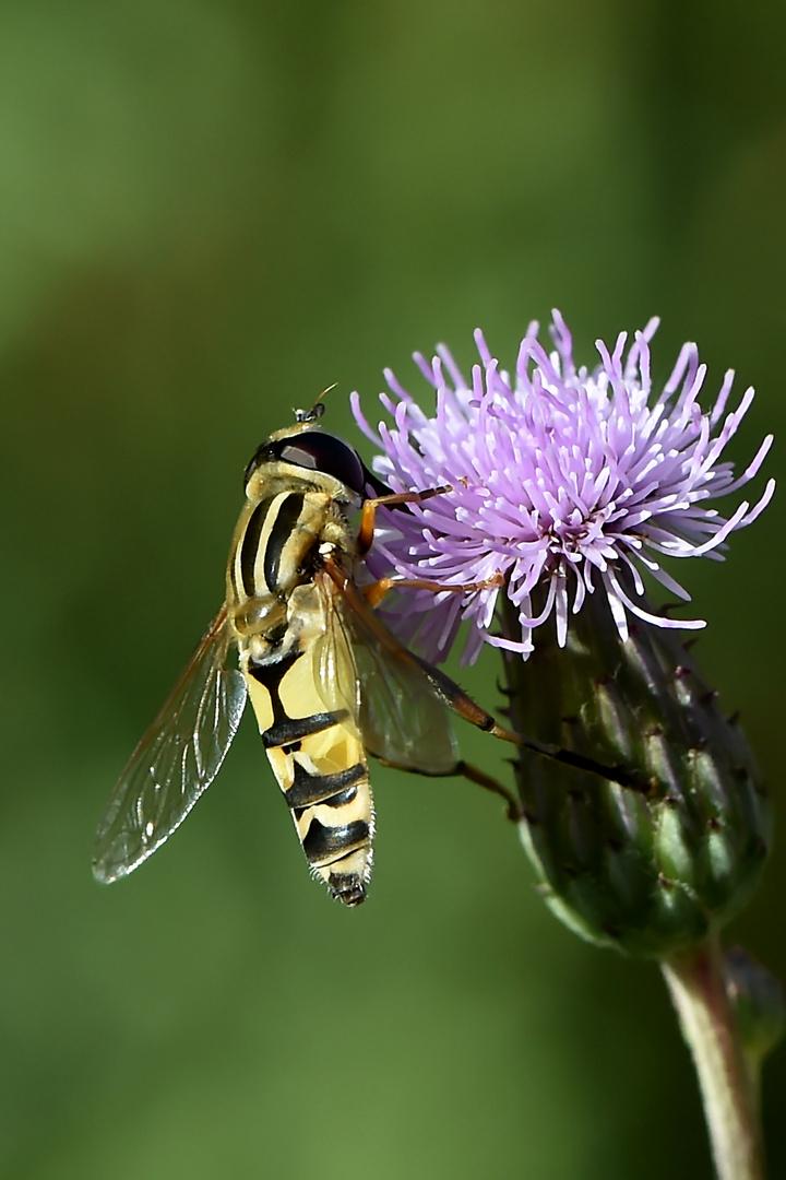 Fliegenprofil