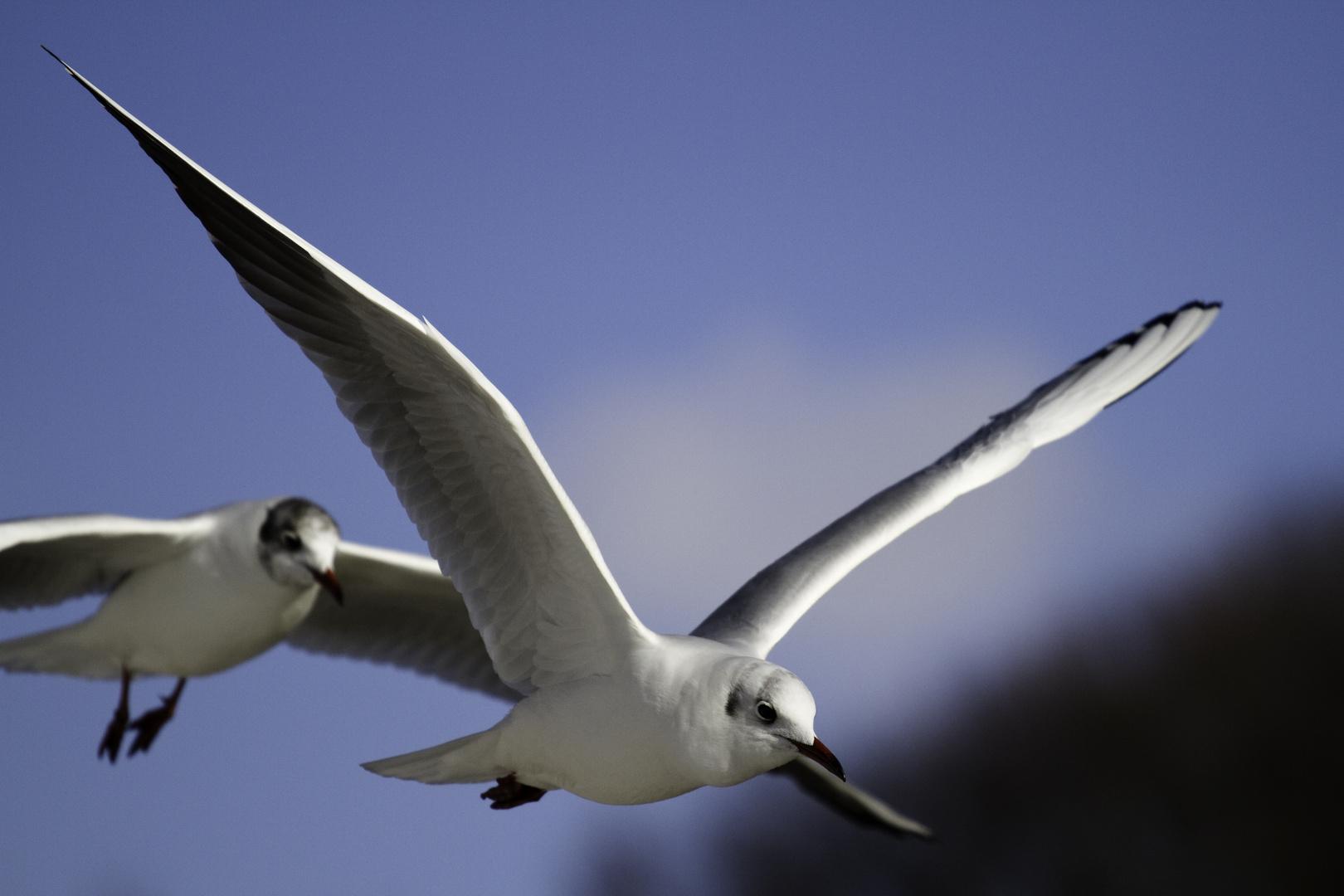 Fliegens als Teil der großen Freiheit