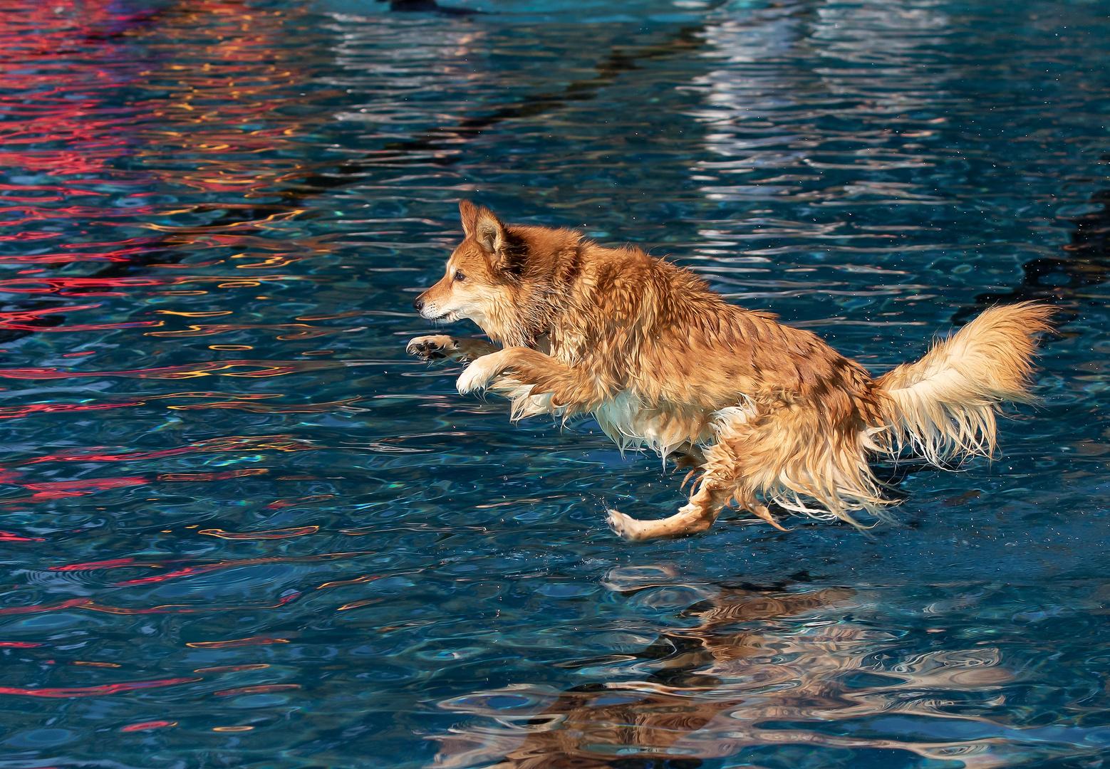 Fliegt die Paula oder läuft sie über das Wasser.