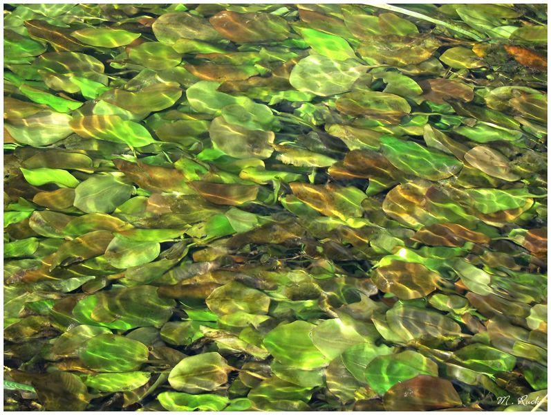 Fließende Wasser ,