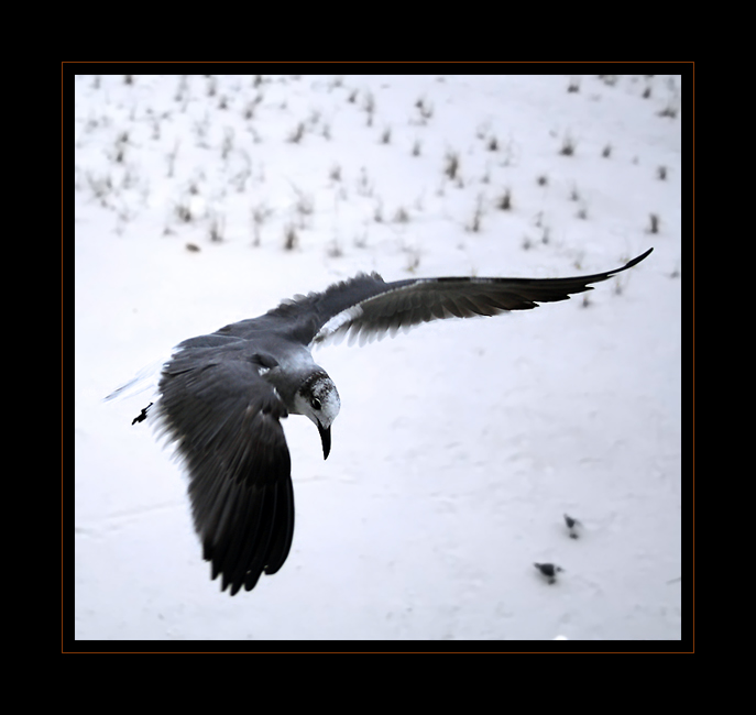 flight 02