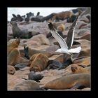flight over seals