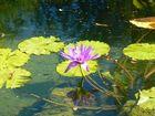 floating beauty