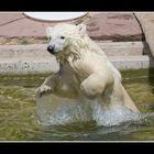 Flocke geht baden...
