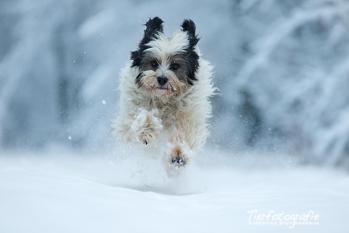 Flocke im Schnee