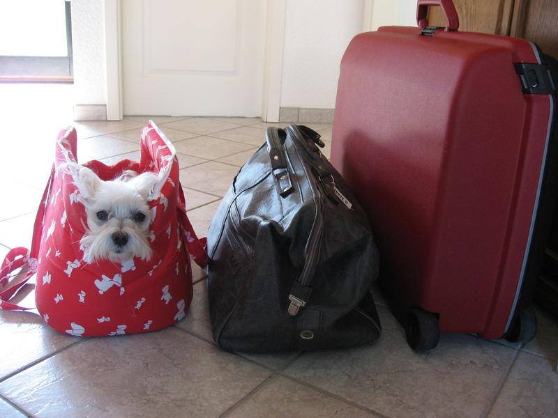 Flocke ist schon bereit zur großen Reise!