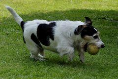 Flockies Lieblingsspielzeug, der Futterball