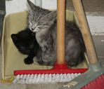 Floh und Sardie - die Katzenkinder aus Sardinien