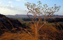 Floodplain im Kakadu Nationalpark