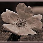# flor #