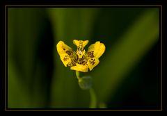 Flor amarilla II