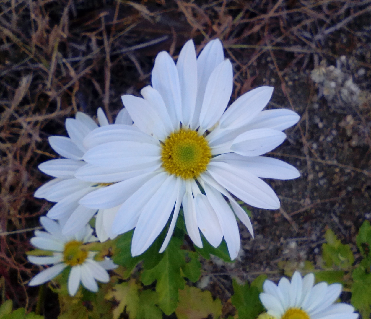 Flor blanca  2