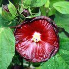 Flor cautivante