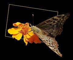Flor con mariposa # Blüte mit Schmetterling