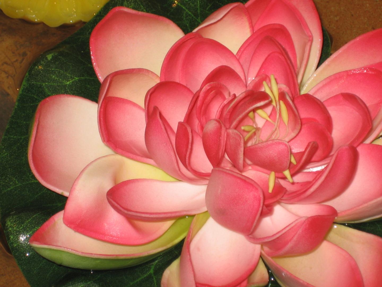 Flor de Agua by Izu