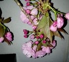 flor de cerezas  chinas