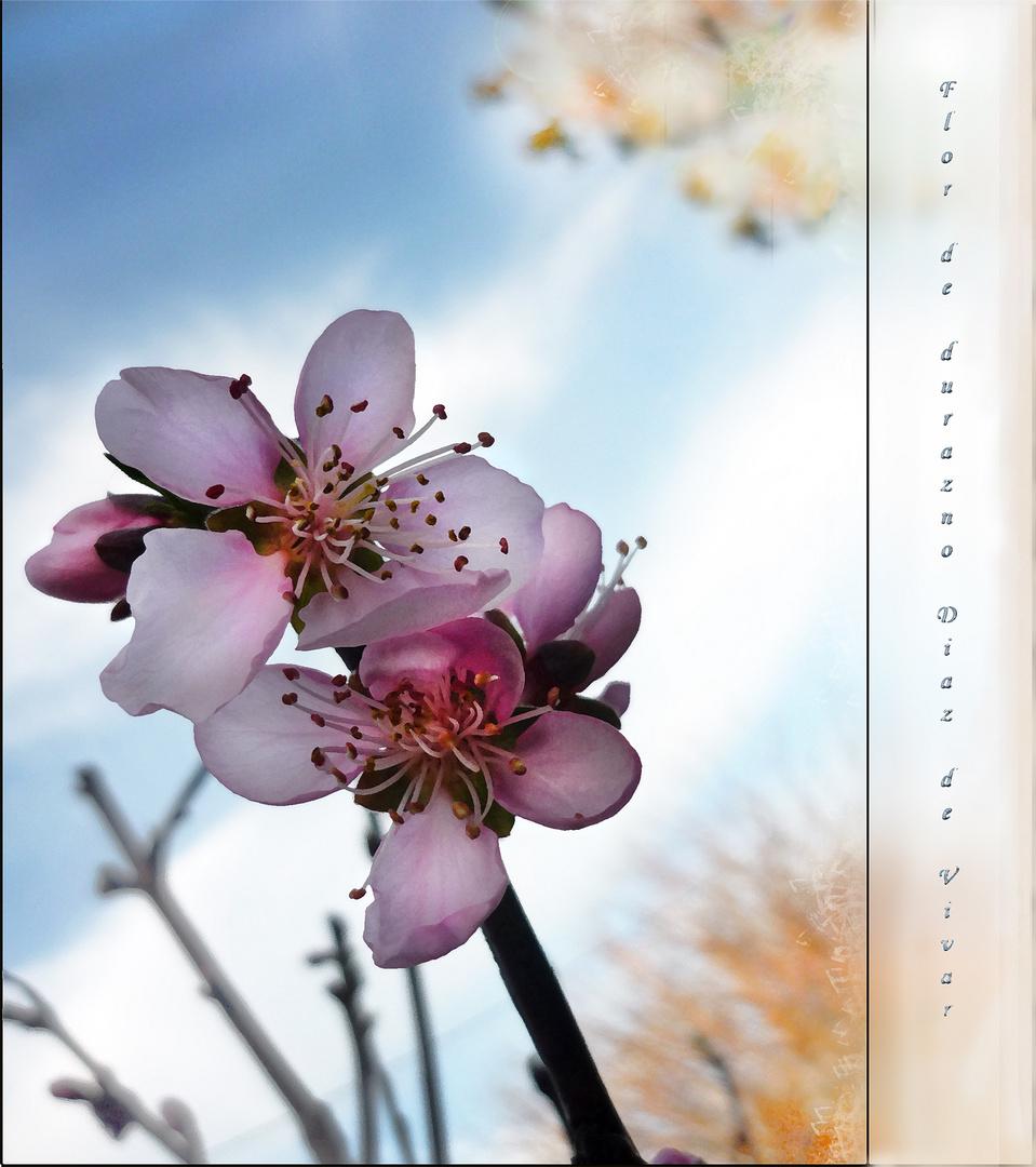 Flor de durazno II