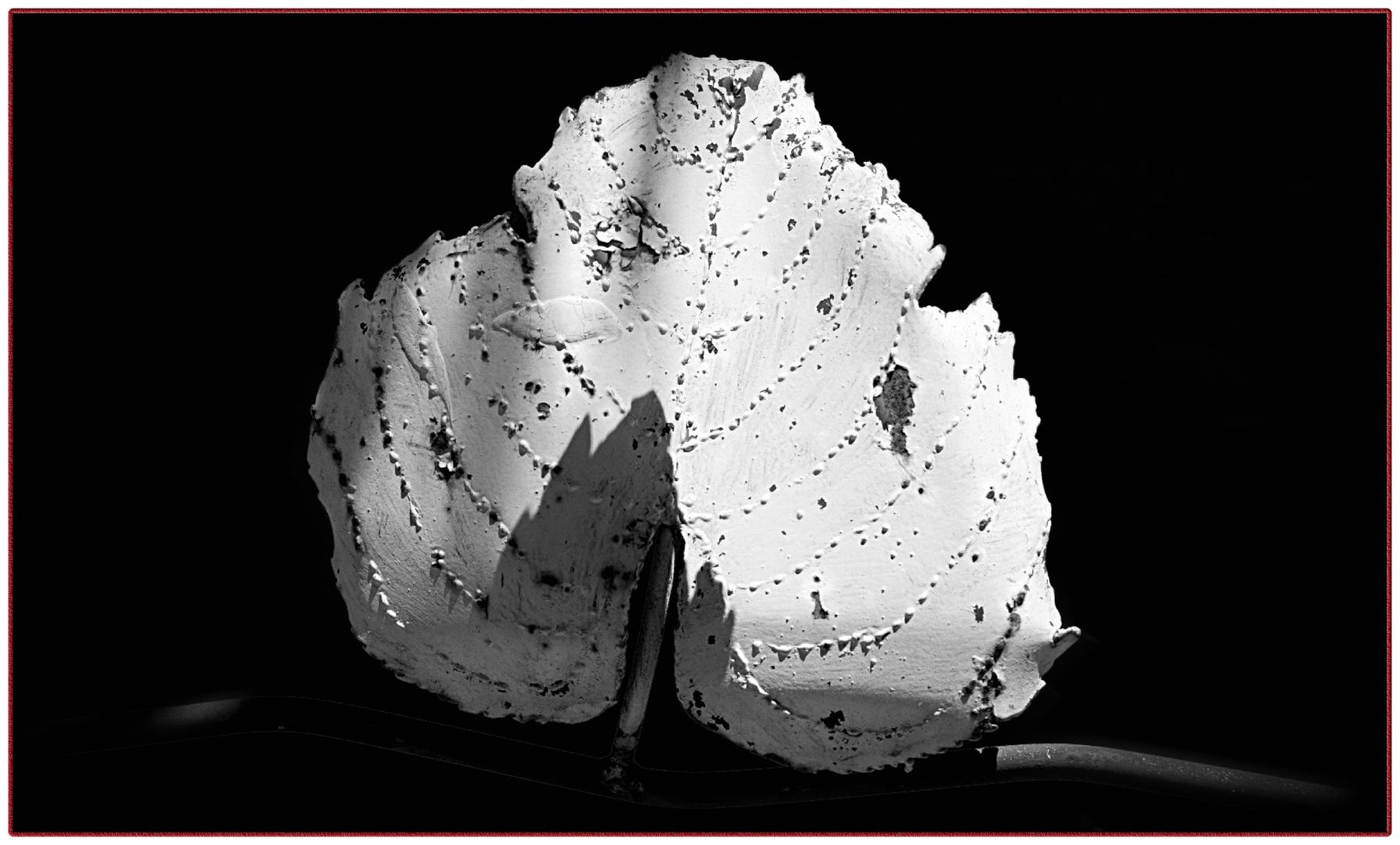 flor de hierro